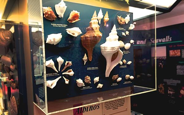 Sanibel_Shell_Museum-11