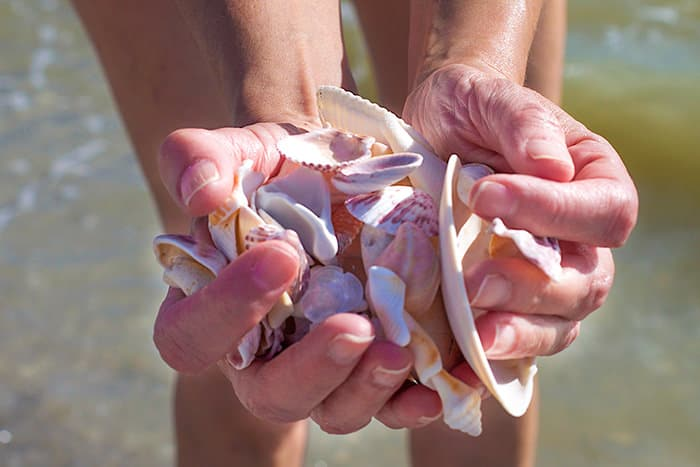 How Tides Affect Shelling & Fishing - Susan's Guide to