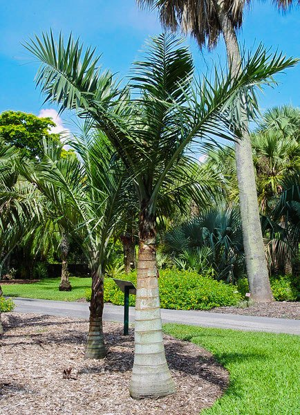 How To Identify Palm Trees On Island